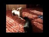 Funny Cat Vs Dog Fight