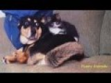 Funny Cat And Dog Best Compilation 2014