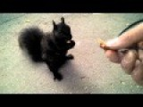 Feeding And Petting A Friendly Black Squirrel
