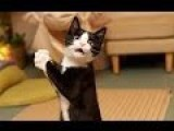 FUNNY CAT STANDING UP