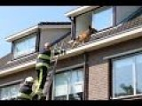 Firefighters Rescue Pet From Rooftop