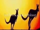 Fugitive Kangaroo Flees Police