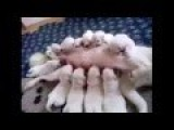 Funny Videos - Puppies Drinking Milk Together