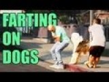 Farting On Dogs Prank - Edbassmaster