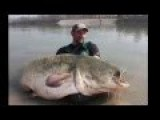 Fishing Giant Catfish In The Amazon River