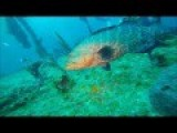 Fun Dive With Divemaster In Training -Traveling Adventures-