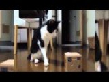 Funny Cat Videos Disturbing Robot Cat In A Box