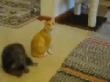 Funny And Cute...Kitten Fights A Cat Statue..lol