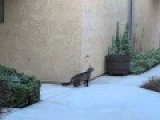 Funny Cat Climbing Into House