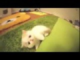 Funny Cats Funny Dogs, Funny Cats Video, Funny Dogs Video, Funny Animals Videos