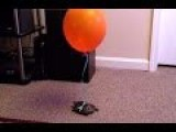 Funny Videos How To Keep Track Of Your Turtle