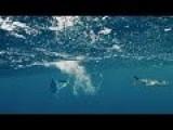 Flying Fish Hunt - The Hunt