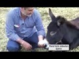 Farmer Drinks Donkey Milk, Claims It's Healthy And Made Soap Out Of It !