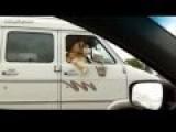 Funny Dog Videos Compilation Dog Activity Like Humans