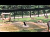Freed From A Bear Bile Farm - Tuffy Jumps For Joy
