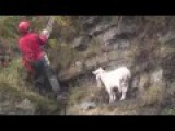 Fear Make This Stranded Goat Rescue Himself