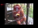Ghetto Monkey