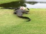 Golf Course Brawl