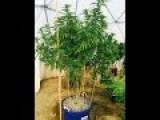 Geodesic Greenhouse Grow Yoursay Youtube 2015