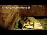GoPro Mice Vs. Victor Jiffy Death Trap