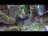 Guy Sets Up A Go-Pro In A Bird's Nest, Catches Horrifying Visitor