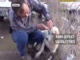 Good Man Who Is Help A Dog