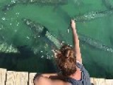 Giant Fish Leaps Out At Tourist For Dinner