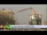 GMO 'Terrorists': Russia Seeks Criminal Punishment For Bio-tech Companies