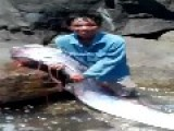 Giant Sea Monster Caught In Central Vietnam