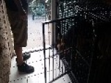 German Shepherd Opens Locked Cage In Seconds