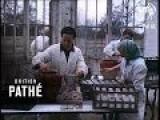 Goat Farm 1956