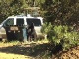 Guy Slaps A Black Bears Butt For Rummaging In His Garbage