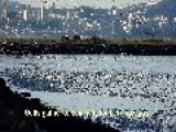Gulls Gone Wild!