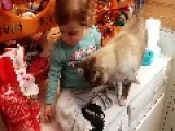 Girl Feeds Cat The Wrong Way