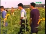 Guy On Something Dances With Sunflower