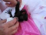 Gentle Baby Bat Has Bath