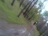 GoPro Or Die: Mountainbiker Gets Chased By Huge Bear!