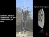 Gecko Inspired Technology Allows A Human To Climb A Glass Wall