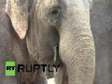 Germany: See Elephants Gorge On Succulent Christmas Trees