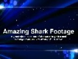 Great White Shark Goes Seal Hunting HD