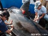 Great White Shark's Epic Ocean Trek Deadliest Catch Got Nothing On These People