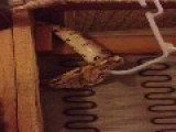 Girl Finds BOA CONSTRICTOR Living In Her 2nd Hand Couch