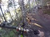 Guy Speeds Into Cluster Of Trees
