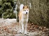 Hachikō - A Dog's Story 2009