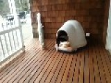 How Many Dogs Can You Fit In A Dog House?