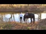 Horse Introduced To Water