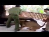 Here Is How Lion Handler Control That King