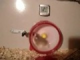 Hamster Wheel Crash!!! Lol