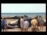 Huge Sperm Whales Found Dead On South Australia Beach