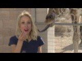 Hot Reporter Gets Kissed By A Giraffe Artist